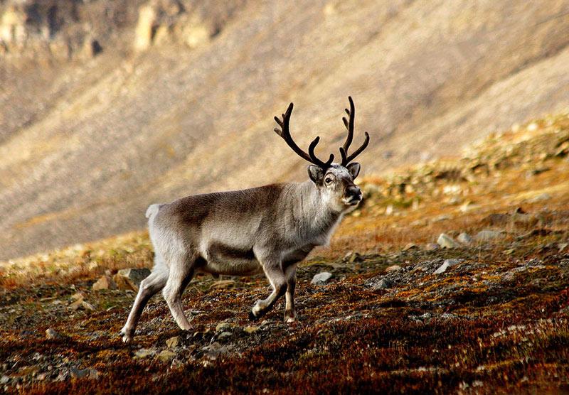 Image. Wikimedia Commons / Per Harald Olsen