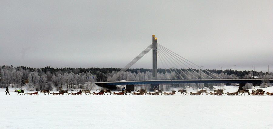 Reindeer 'caravan' (pororaito) in Rovaniemi 2008.